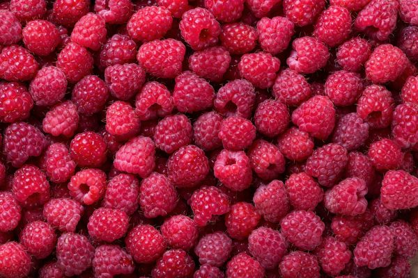 Ripe raspberry background. Closeup berries