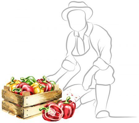 menu fresh supplier