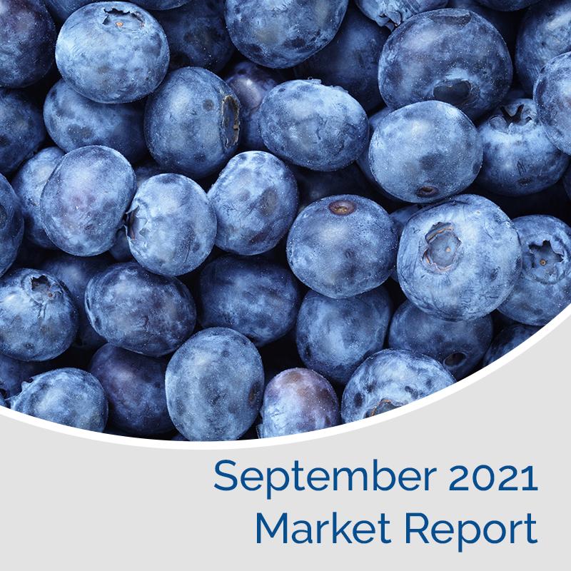 Market Report September 2021