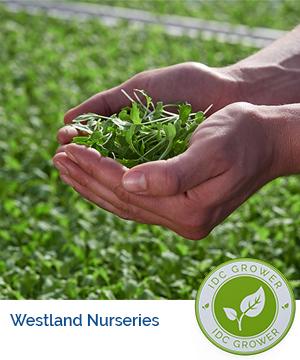 Westland Nurseries Grower